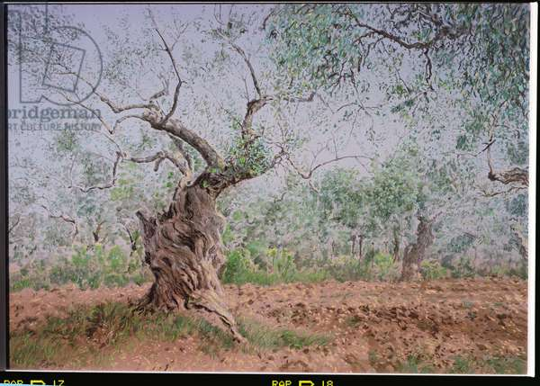 Olive Grove, 2001 (w/c and pastel on handmade paper)