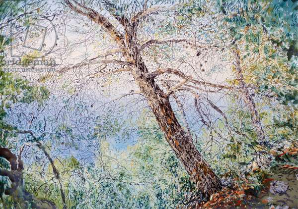 Pine Tree in Aetos, 1998 (w/c and pastel on handmade paper)