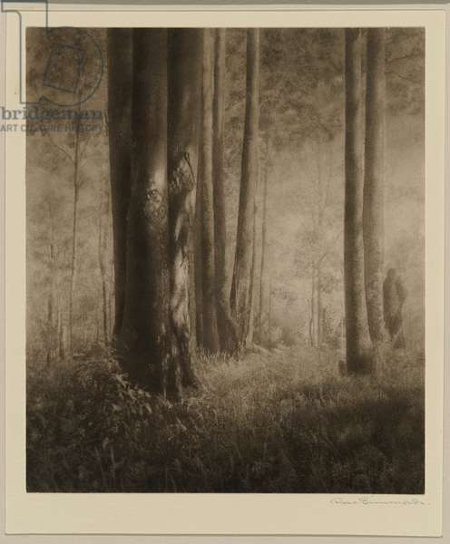 Tall and stately, c.1930s (bromoil photo)