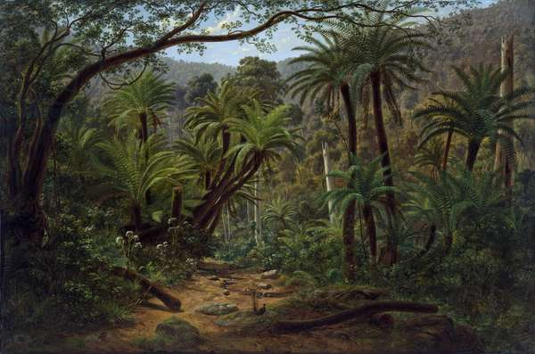 Ferntree Gully in the Dandenong Ranges, 1857 (oil on canvas)