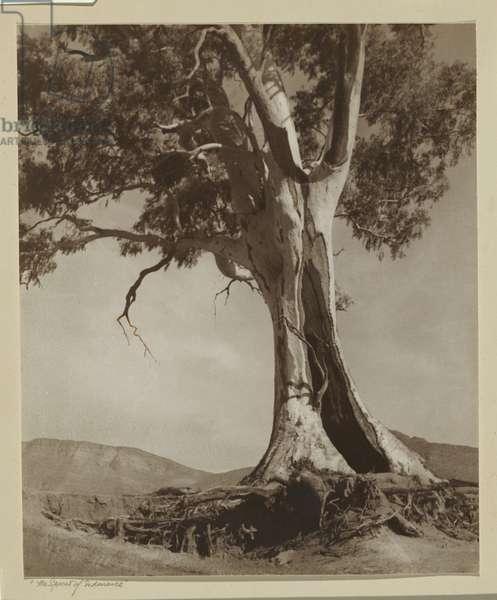The Spirit of Endurance, 1937 (gelatin silver photo)