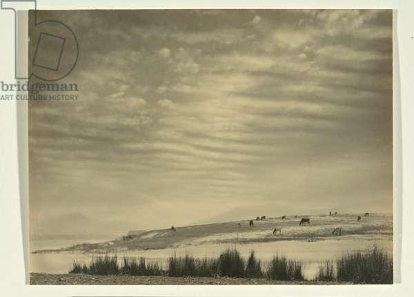 Marshlands, c.1930s (gelatin silver photo)
