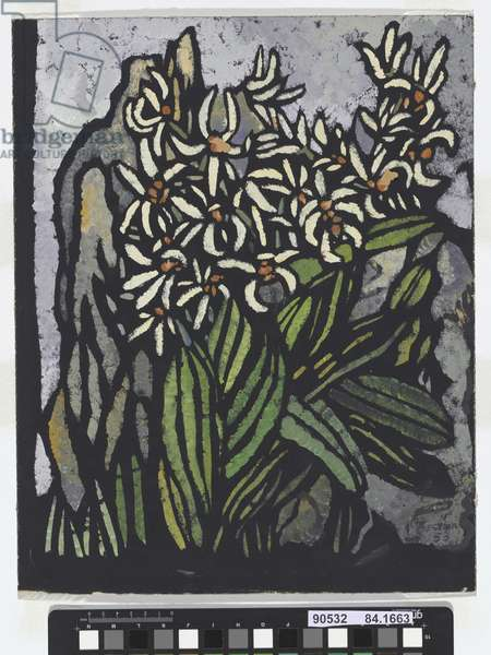Rock Lily, 1953 (hand-cut paper stencil image)