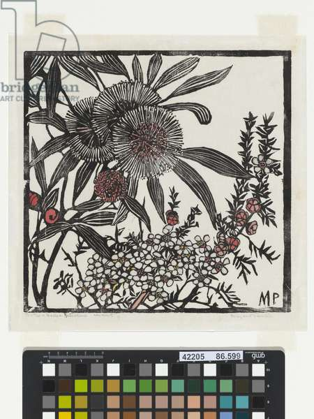 Tea-tree and Hakea petiolaris, 1936 (hand-coloured woodcut)
