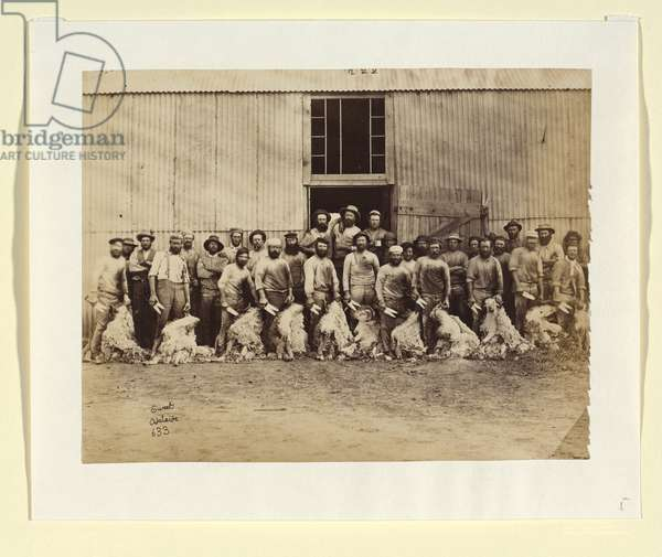 Sheep shearers, Canowie Station. c.1878-80 (albumen silver photo)