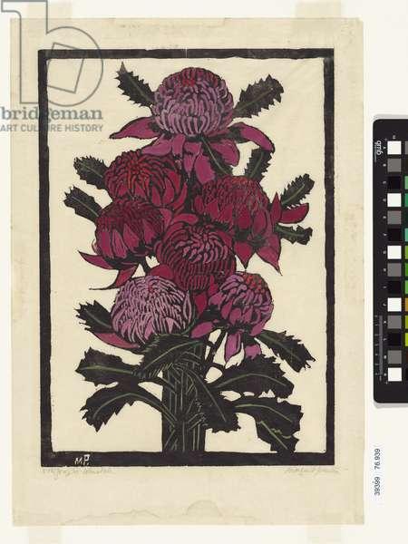 Waratahs, 1925 (colour woodcut)