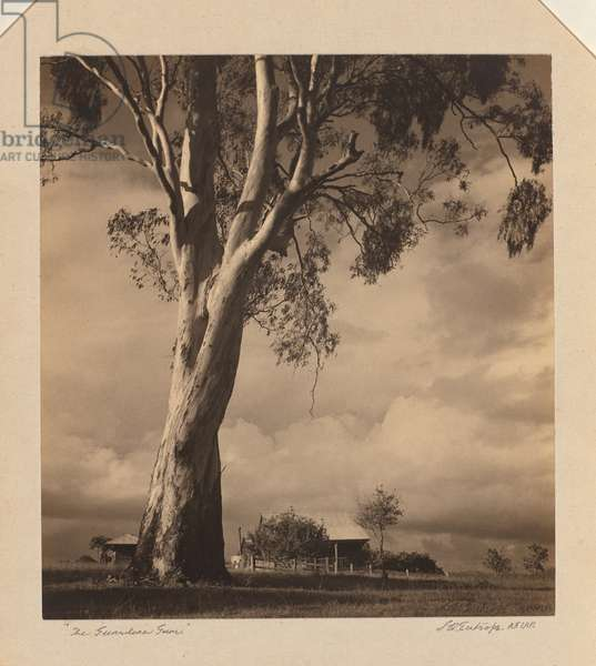 The guardian gum, c.1920-30 (gelatin silver photo)