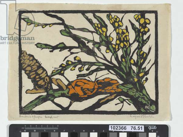 Banksia and fungus, 1936 (colour woodcut)