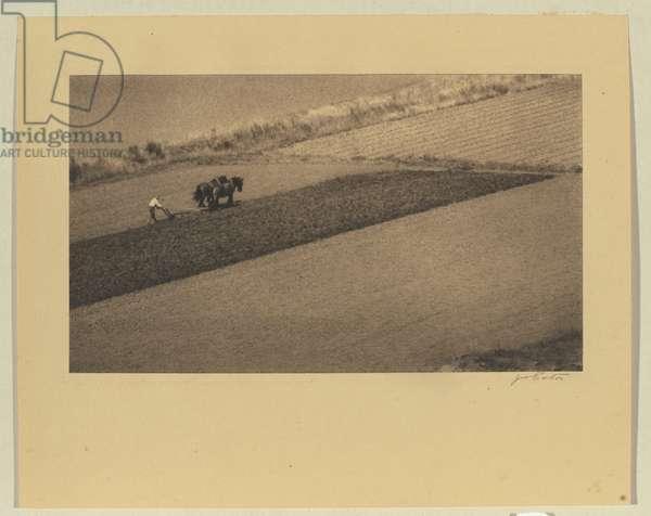 Landscape pattern, c.1934 (chlorobromide photo)