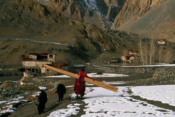Monk carrying wood beams in a remote village in Ladakh (photo)