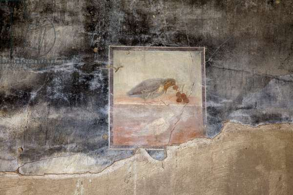 Painting of a partridge eating grapes in a house in Herculaneum (photo)