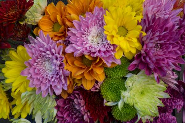 A colourful bouquet of dahlias, daisies, and mums