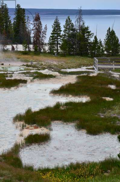 A landscape of grass, steaming pools of water, trees and Yellowstone Lake (photo)