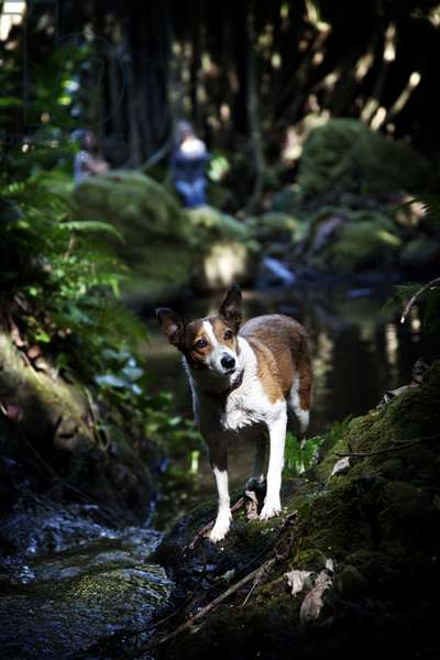 A dog standing on a mossy bank of a creek on the Big Island of Hawaii (photo)