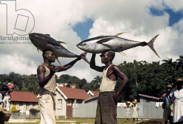 Fishermen balance yellowfin tuna fish on their heads, Castries, Saint Lucia, 1941 (photo)