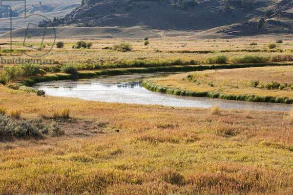 Golden-hued meadows and hills around meandering Slough Creek (photo)