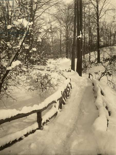 A winter woodland marked with a snow covered fence, USA, 1916 (b/w photo)