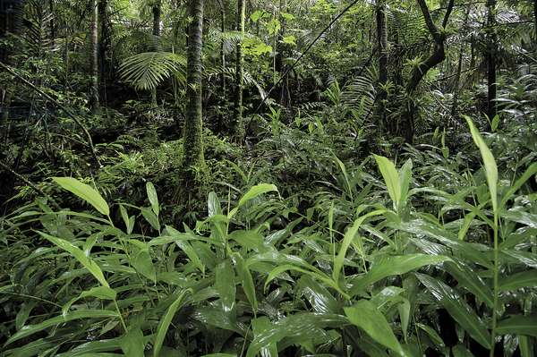 El Yunque National Forest (photo)