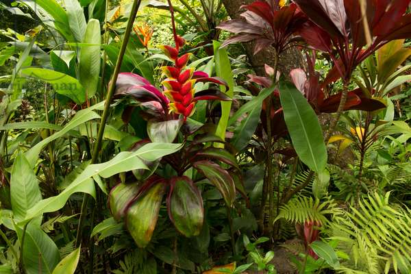 colourful tropical flowers, plants, and ferns in a lush botanical garden (photo)