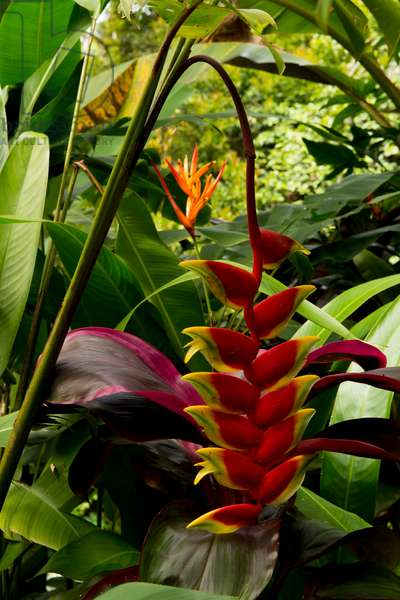 colourful tropical flowers and plants in a lush botanical garden (photo)