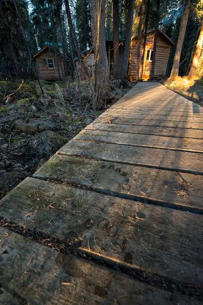 Grizzly bear tracks in frost on a wooden path at the Bear Cave Adventures lodge (photo)