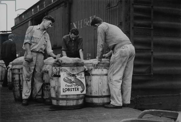 Stevedores with barrels of fresh lobsters, Boston, Massachusetts, 1936 (b/w photo)