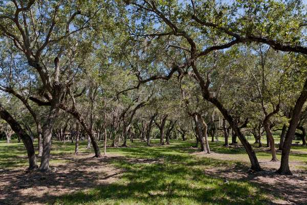 Trees fill the landscape at the Fairchild Tropical Botanical Gardens (photo)