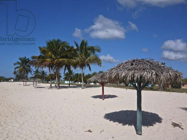 Palm trees grow on Playa Giron, the site of the Bay of Pigs invasion (photo)