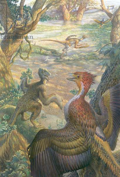 Feathered dinosaurs prepare to lift off in flight (colour litho)