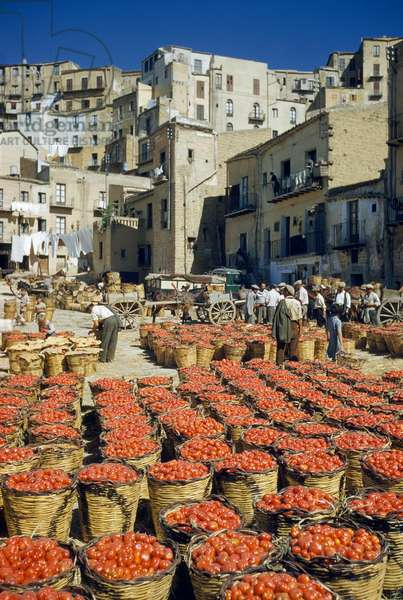 Baskets filled with tomatoes stand in rows in piazza, Agrigento, Sicily, Italy, 1955 (photo)