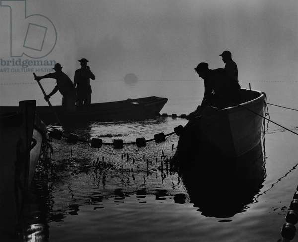 Fishermen haul of sardines in the early morning fog, Eastport, Maine, 1951 (b/w photo)