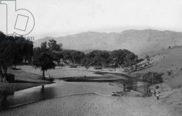 Cottonwood trees around an oasis, near Columbus, New Mexico, USA, 1916 (b/w photo)