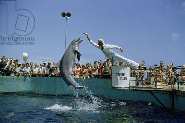 An attendant feeding a dolphin during a performance, Marineland, near Saint Augustine, Florida, 1952 (photo)