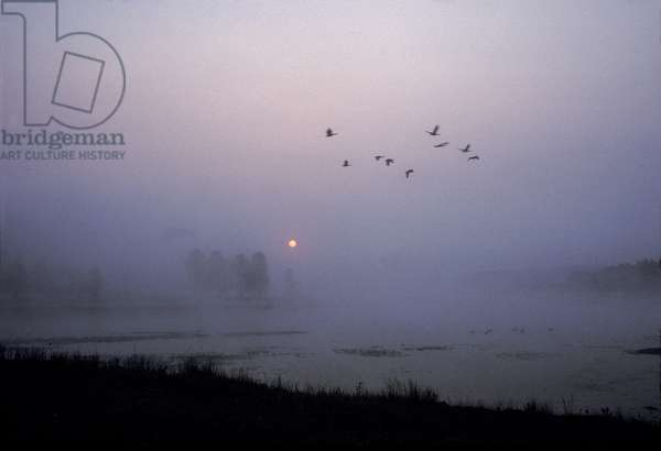 Canada geese fly over Alum Creek at dawn (photo)