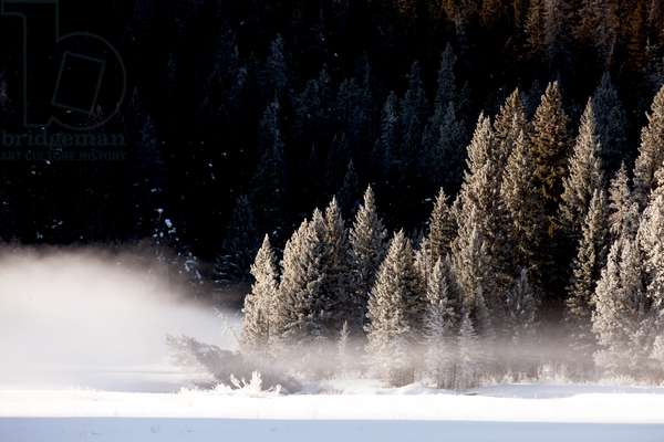 Fog rises from a field near snow-covered trees (photo)