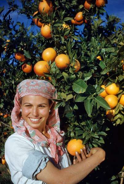 Woman holding blood orange stands beside tree laden with fruit, Valencia, Spain, 1950 (photo)