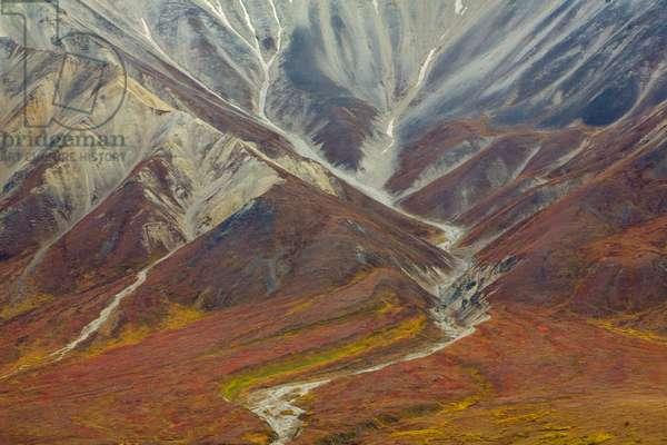 Vivid fall colours in tundra at base of the Alaska Range (photo)