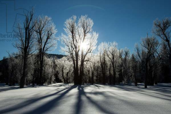 Sunlight through ice-covered trees in a snowy landscape A halo over the sun (photo)