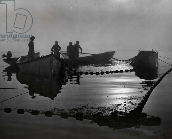 A sardine fleet working nets off Eastport, Maine, Eastport, Maine, USA, 1952 (b/w photo)