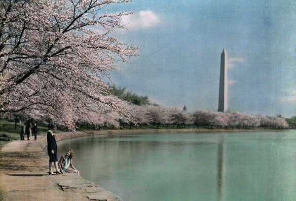 Two women pose underneath one of Potomac Park's many cherry blossoms, Washington DC, 1930 (autochrome)