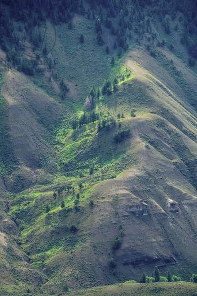 Conifers on a bright green mountain slope (photo)