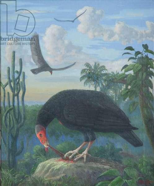 Turkey Vulture (Cathartes aura) (oil on canvas)