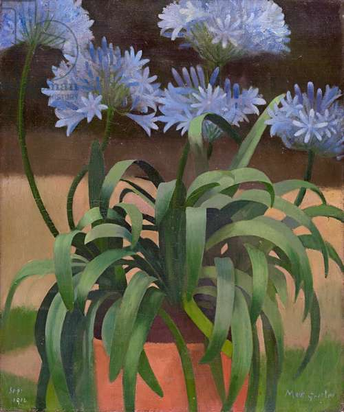 Agapanthus, 1914 (oil on canvas)