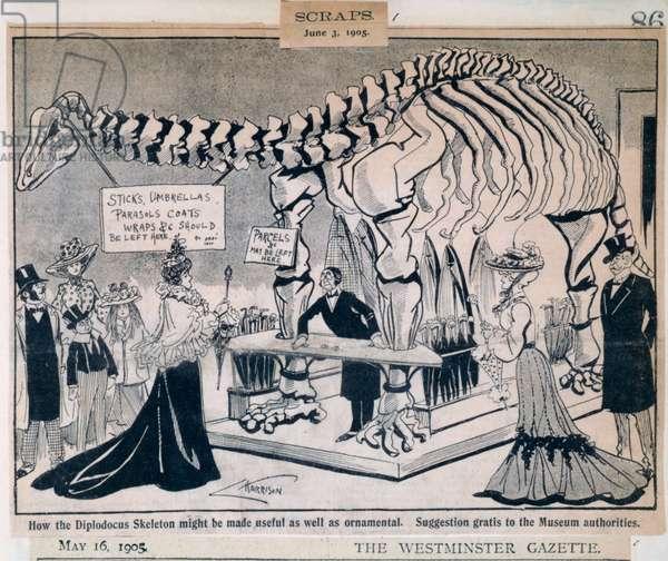 Diplodocus carnegiei, 1905 (litho)