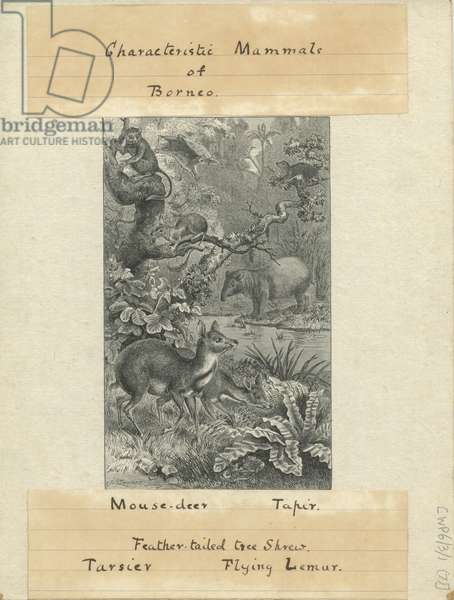 Proof print entitled Characteristic Mammals of Borneo, for The Geographical Distribution of Animals by Alfred Russell Wallace, 1876 (engraving)
