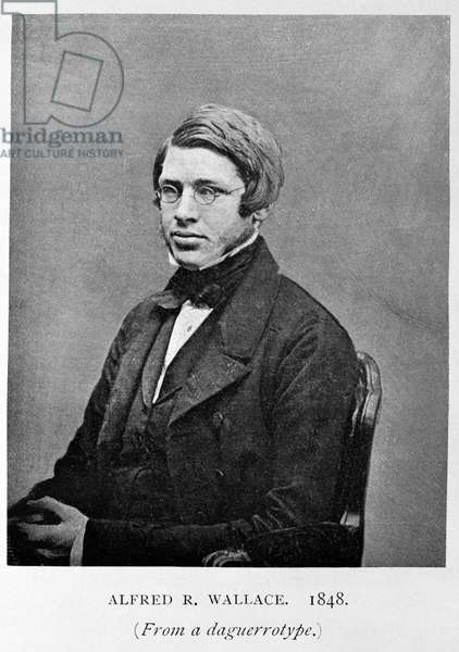 Alfred Russel Wallace (b/w photo)