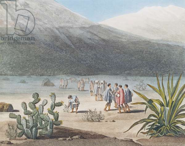 Humboldt and his party collecting plant