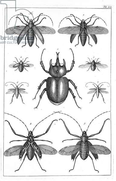 Beetles illustration
