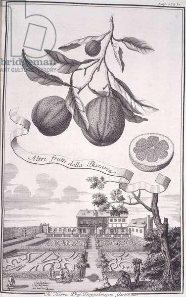 Altri frutti della Bizzaria