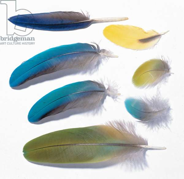 A collection of birds' feathers (photo)